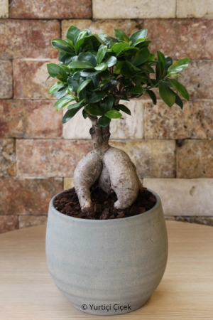 Bonsai Ağacı Özel Tarz