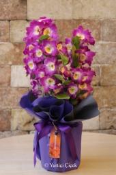 Özel taba rengiyle sevdiklerinize özel bir orkide göndermek istediğinizde her gün hizmetinizdeyiz.