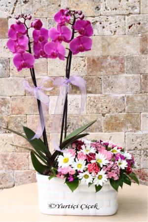 Mor Orkide ve Kır Çiçekleri